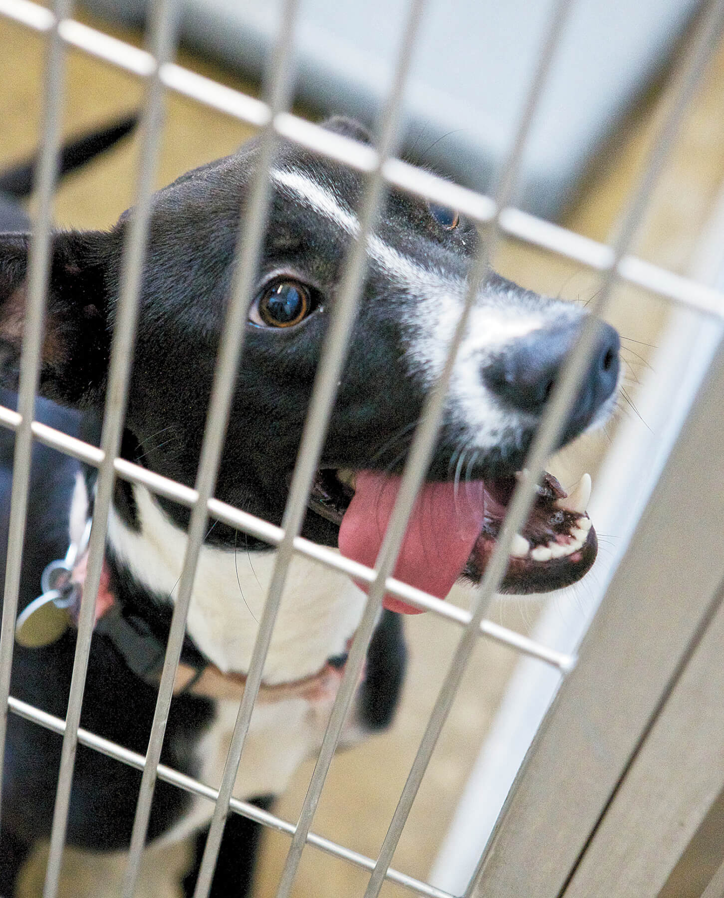 COVER STORY: County shelter claims improvements despite legal concerns