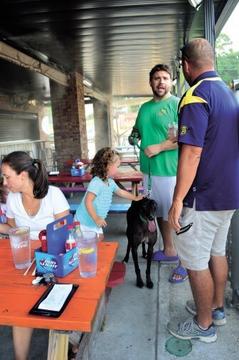 Night Shula, a rescued greyhound, enjoys the dog-friendly atmosphere of the The Hungry Owl.