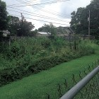An overgrown drainage ditch behind Jennings Drive.