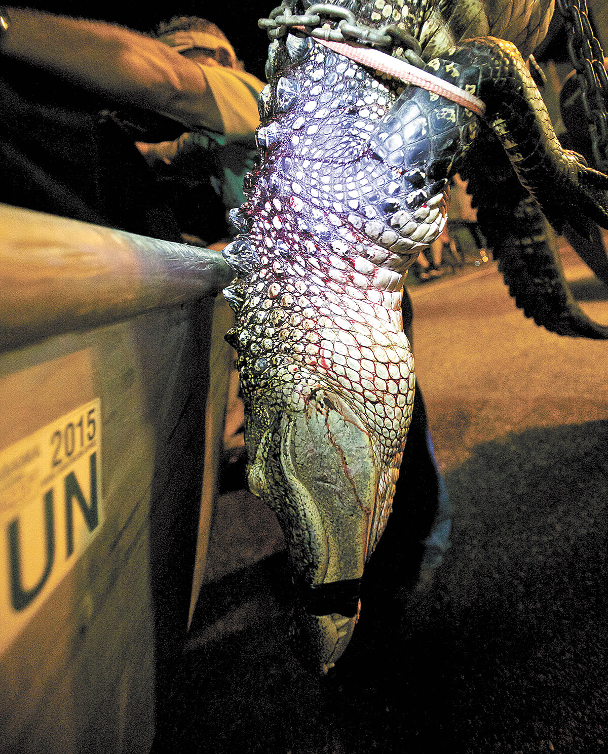 COVER STORY: Hunting the hunters at Alabama's two-weekend gator season