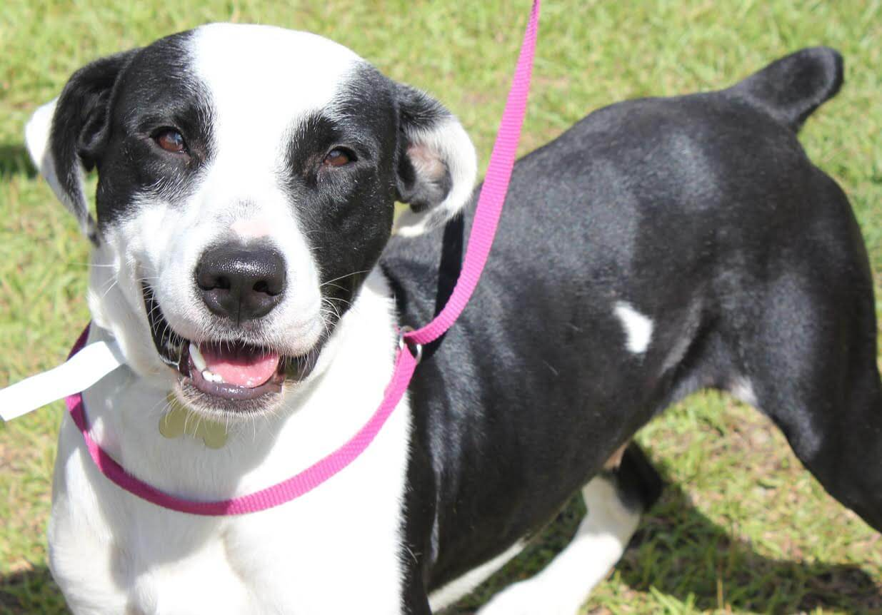 Mobile County Animal Shelter offering free pet adoptions