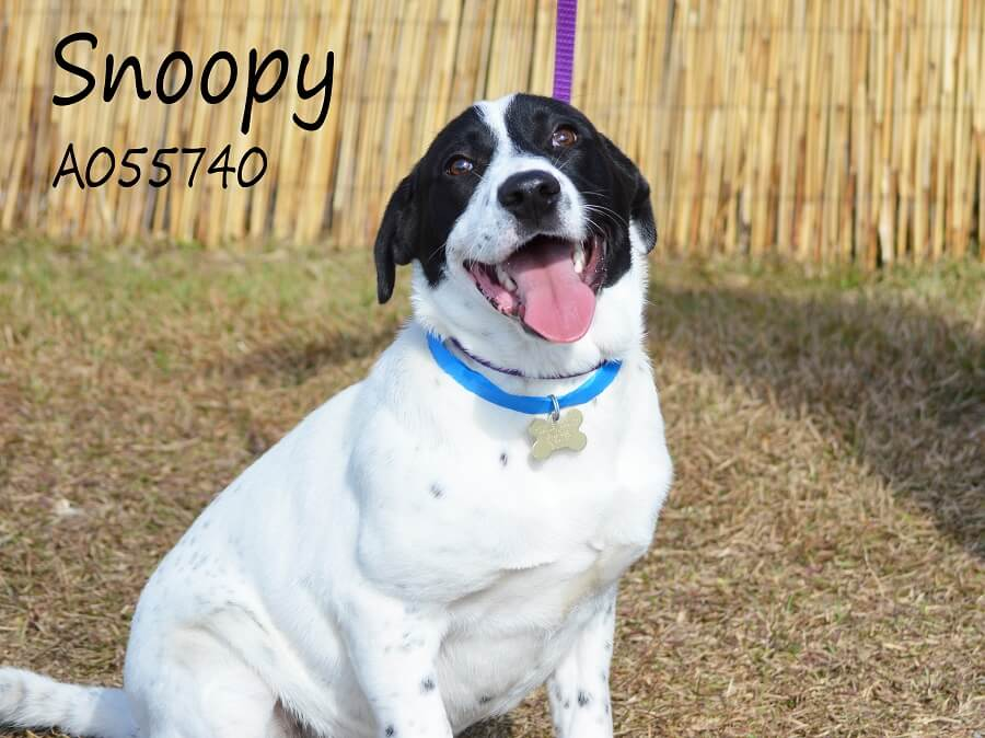 County shelter, theater partnering to find homes for dogs this Christmas
