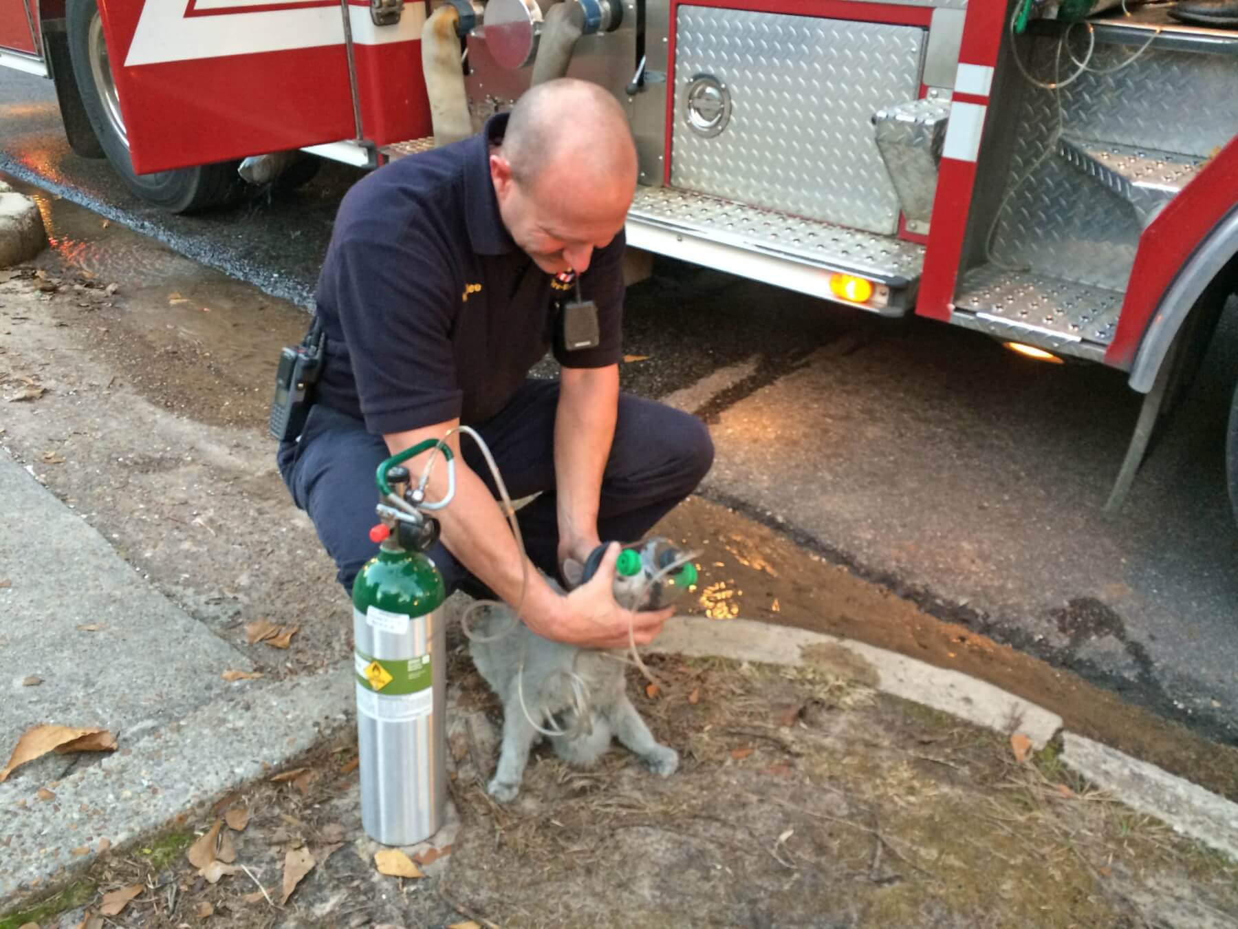 Firefighters rescue several pets from midtown house fire