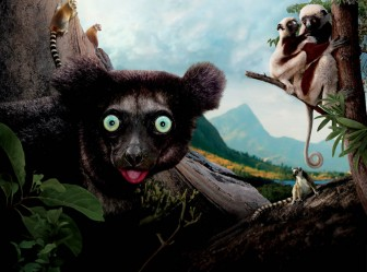 """Island of Lemurs: Madagascar"""