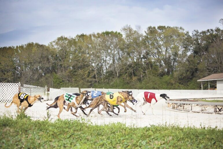 (Photo/Jesse Knott via PCi Gaming) PCI Gaming reported a $5.6 million take on live dog racing in 2014, a year the Mobile Racing Commission distributed just $127,000 in tax proceeds to local organizations.