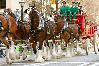 (Photo/Courtesy of Anheuser-Busch) Look for the famous Budweiser Clydesdales at four Mardi Gras parades in Mobile beginning Feb. 2.