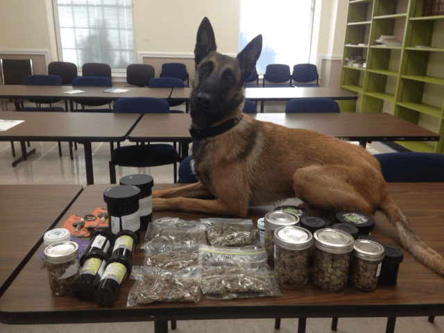 K-9 discovery leads to arrest in Tillman's Corner