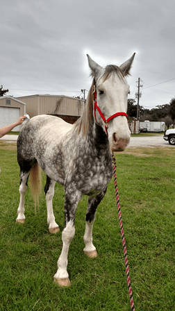 MPD wants your help naming their new horse