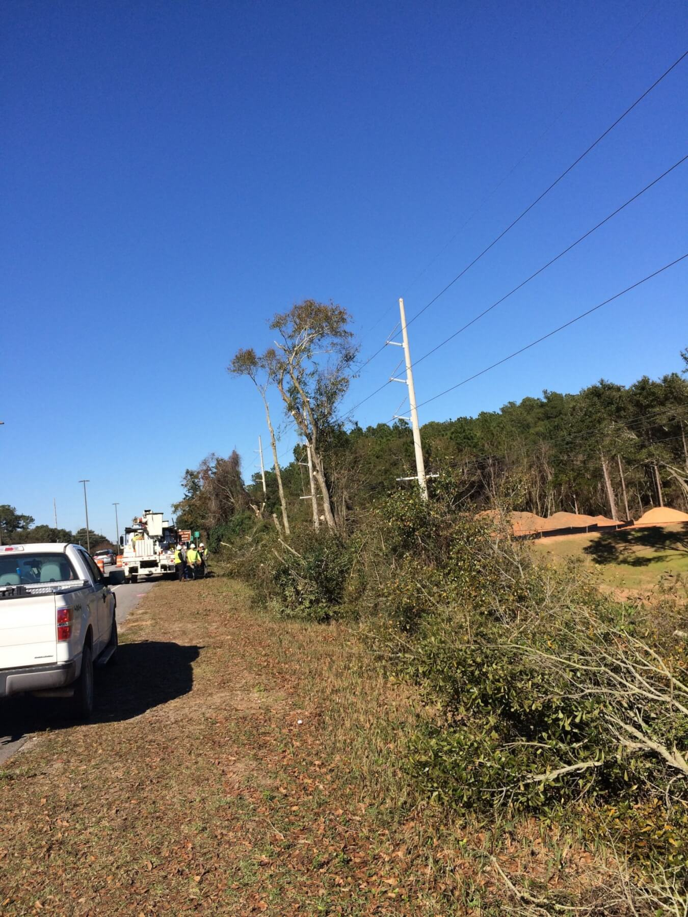 Daphne tree removal causes controversy