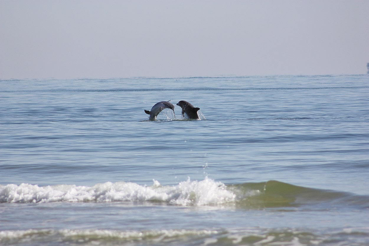 The life and death of coastal Alabama dolphins
