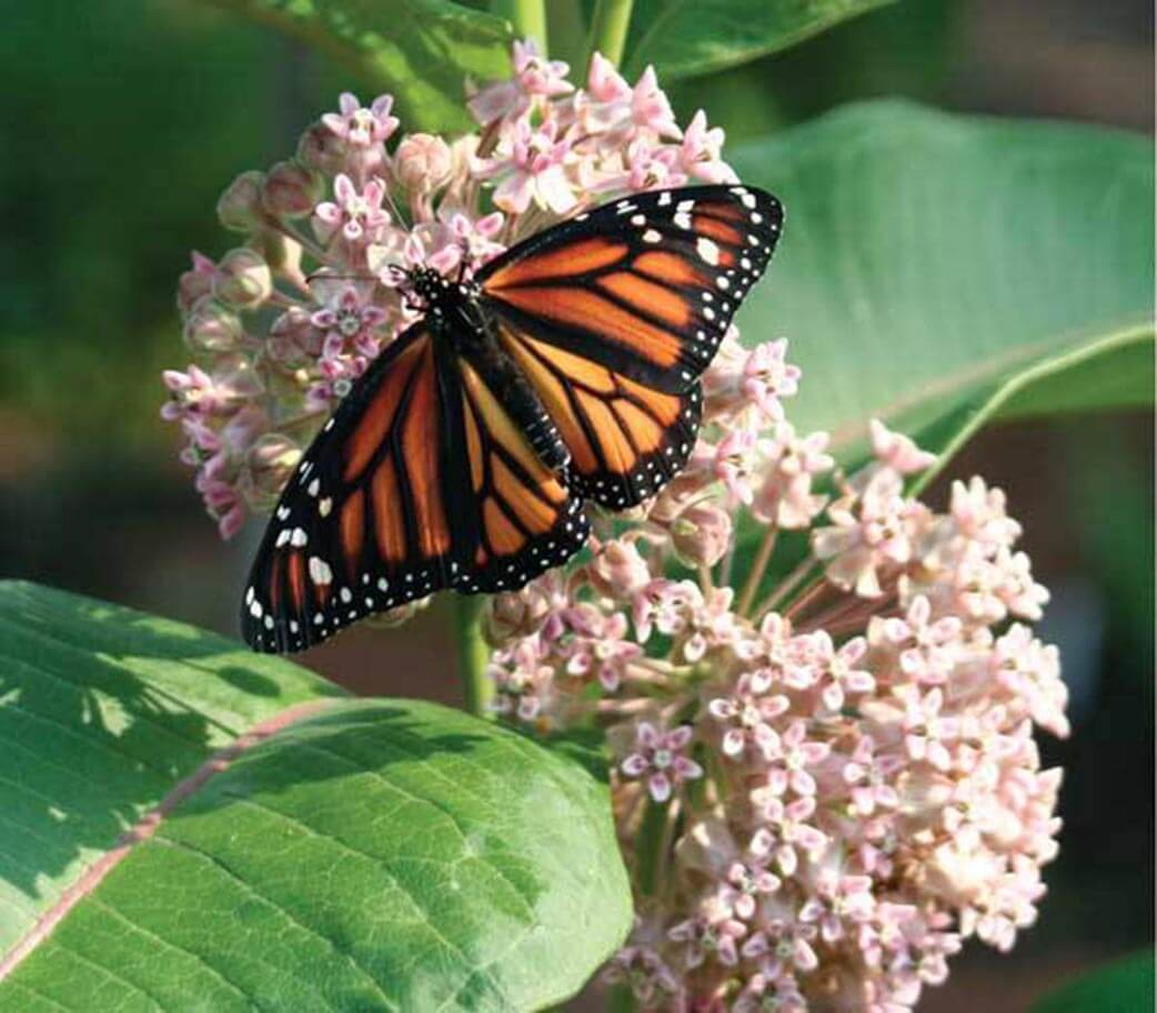 Spring is perfect time to start a butterfly garden