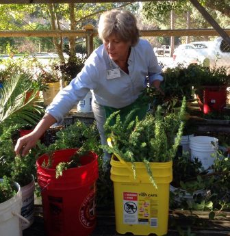 (Photo by Alice Marty) Jan Tanner, current Master Gardener president, at a workshop in preparation for the MG Greenery Sale.