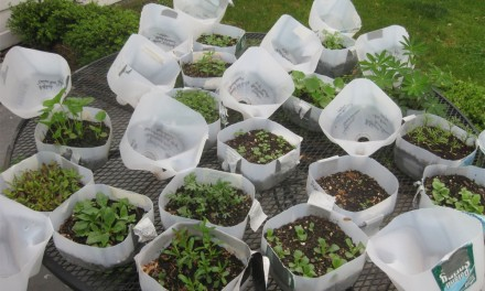 How to start your winter sowing now