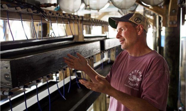 Commercial oyster farms thriving in Alabama waters