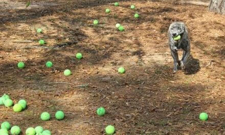 South Baldwin group says new animal shelter opening soon