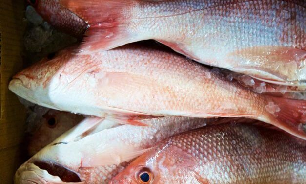 Feds approve extended snapper season