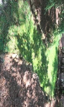 Mosses: Gardening with patience