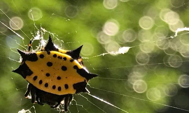 'Charlotte's Web' in your garden