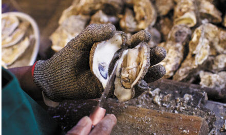 Can restoration funding save Alabama's ailing oyster industry?