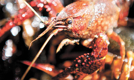 Crawfish season kicks off in Mobile with first of many boils downtown