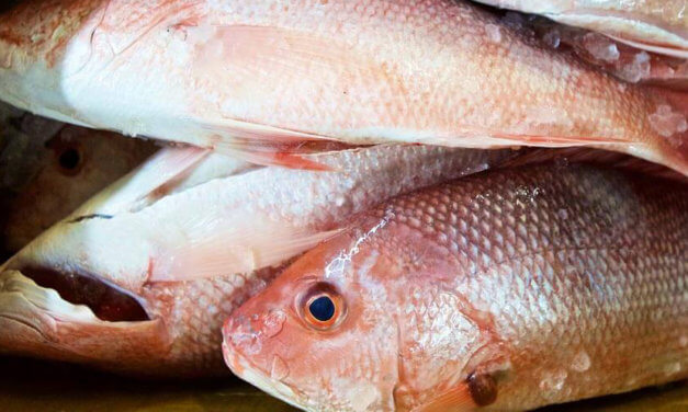 Alabama ends red snapper fishing 6 weeks early