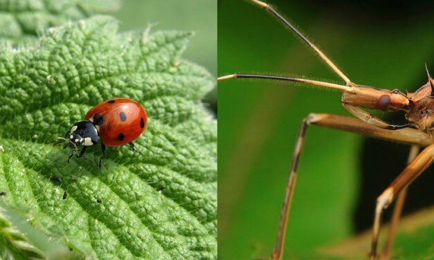 Insect superheroes save our gardens, crops
