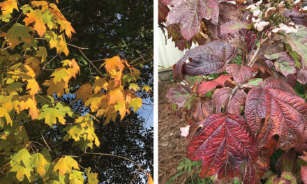 Fall color in South Alabama?