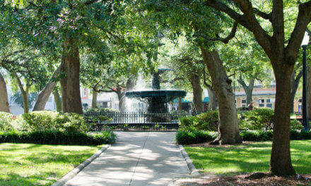 Large oaks could be removed from Bienville Square