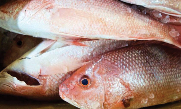 Bipartisan bill aims to curb mortality rate of discarded fish