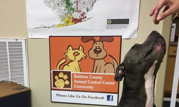 Cities considering costs of South Baldwin animal facility