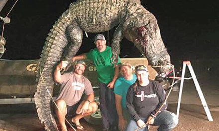 Mobile-Tensaw Delta busy during alligator season