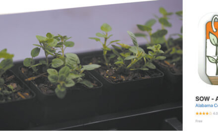 Starting garden transplants from seed indoors