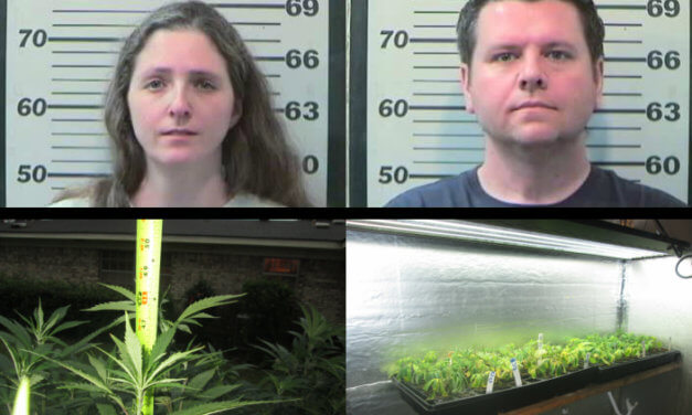 MCSO: Dozens of pot plants found in west Mobile home