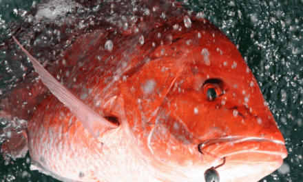 State announces two additional days of Red Snapper season