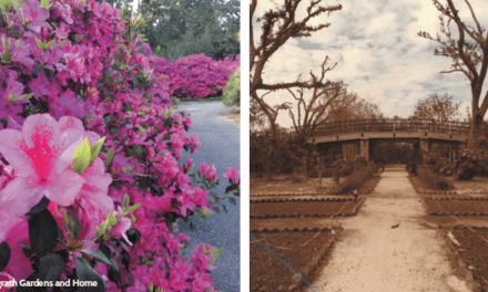 Bellingrath Gardens: 40 Years after Frederic