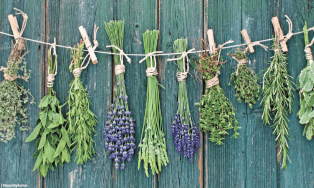 Seven herbs and why you must have them
