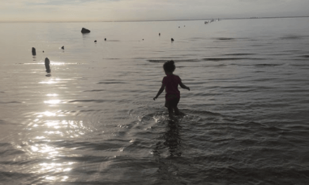 Research vs. Rumor: Is it safe to swim in the bay?