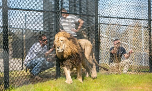 Gulf Shores zoo ready to show off new digs