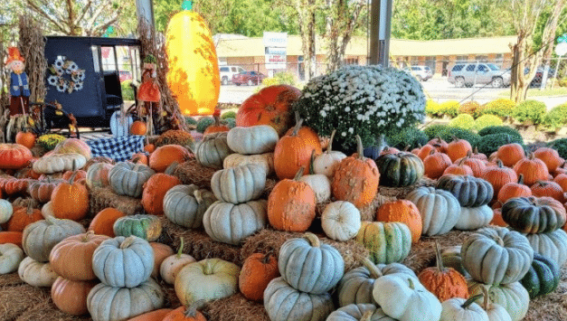 Pop's Midtown Pumpkin Patch hits Loop area