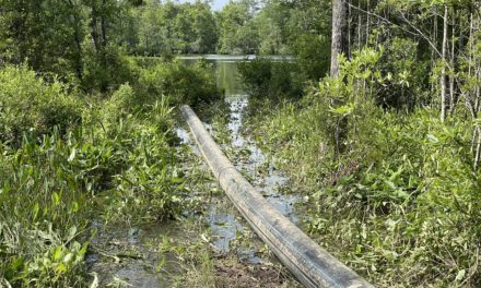 MAWSS to replace broken sewage pipe after spill near Hall's Mill Creek