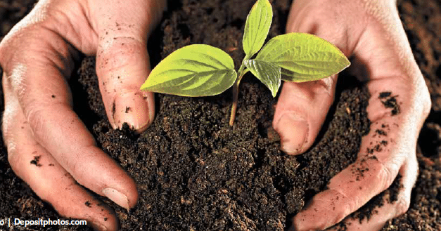 Horticultural Therapy: A people-plant connection